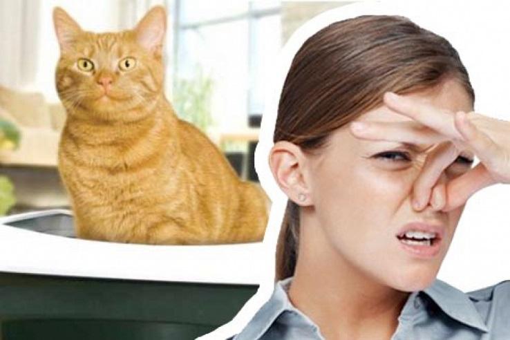 Запах мочи домашних животных в Балаково